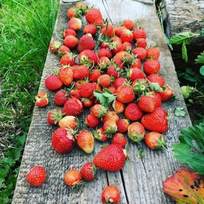 growing your own fruit
