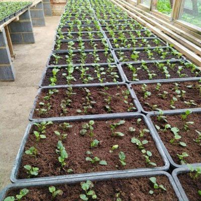 Beddingplants1