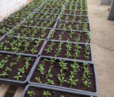 Beddingplants2